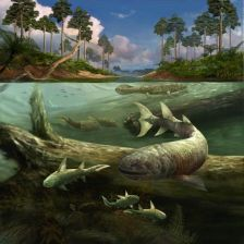 Devonian Mural from the Field Museum of Natural History in Chicago showing a tetrapod near the surface of the water